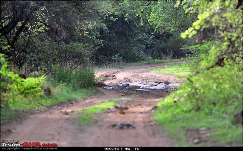 Gurgaon - Ranthambhore - Jodhpur - Gurgaon: Big Cats call again..!-1636.jpg