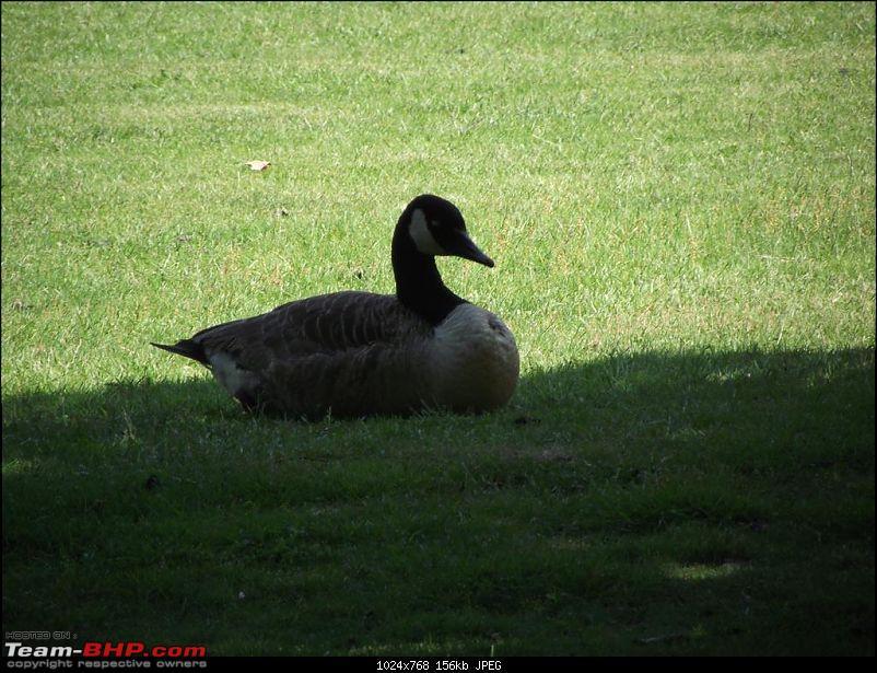 Summer 2012, Spent in England-dscf2715-medium.jpg