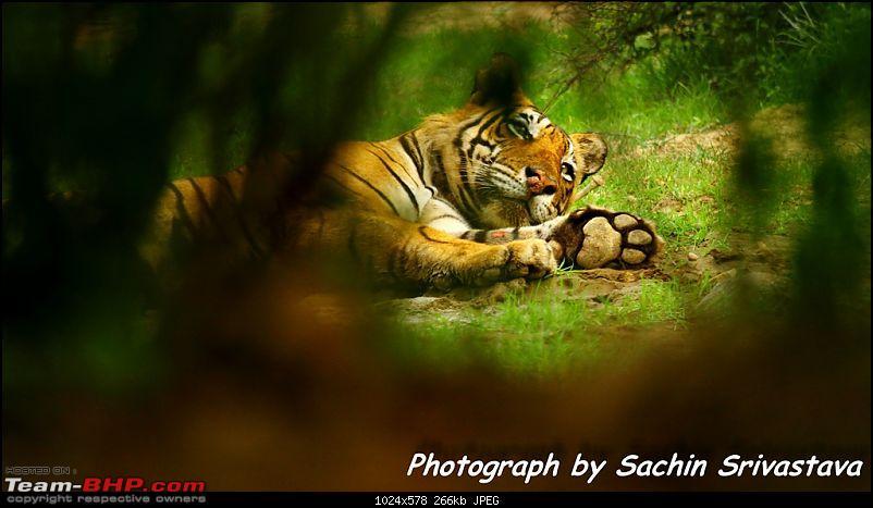 Sariska Tiger Reserve - Land of Tigers? Quick getaway from Gurgaon-img_0616_1.jpg