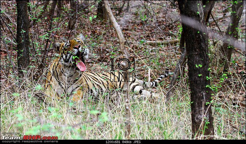 Ranthambhore National Park - Tigers and More!-img_7128.jpg