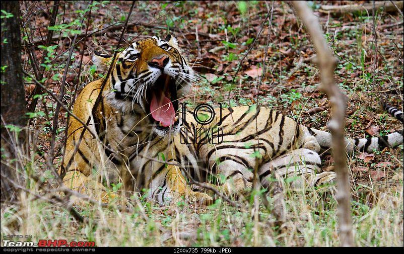 Ranthambhore National Park - Tigers and More!-img_7234.jpg