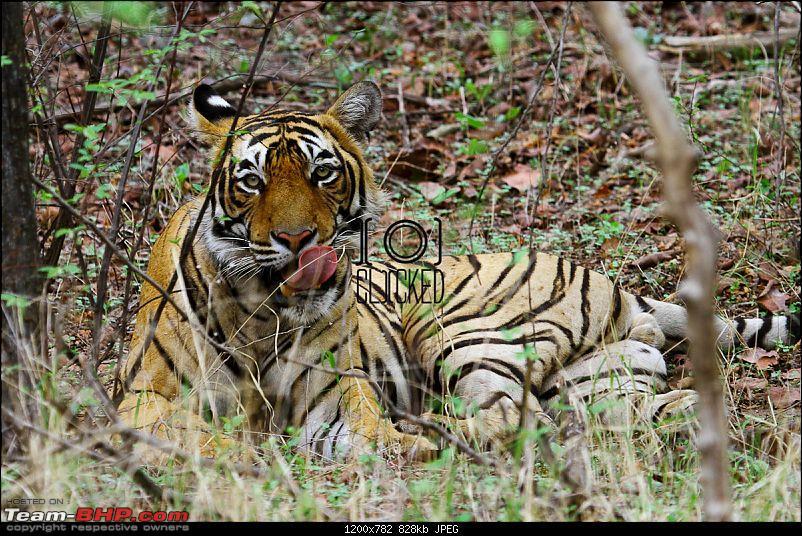 Ranthambhore National Park - Tigers and More!-img_7243.jpg