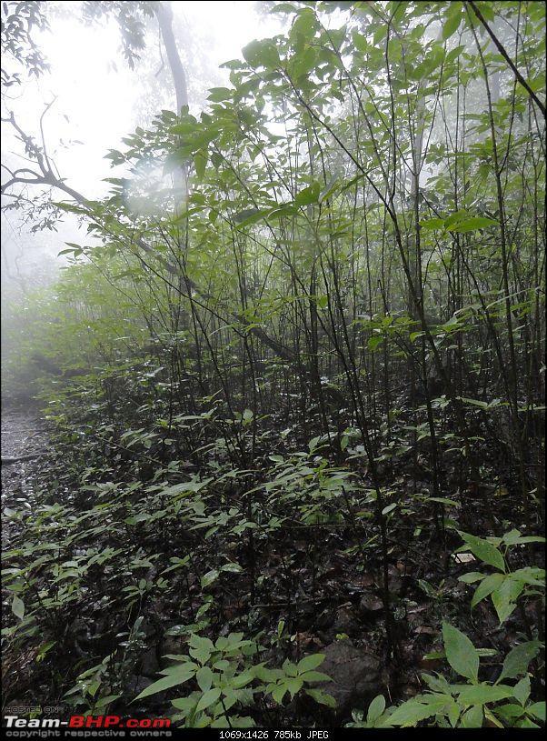 Bhimashankar – My first official Trek-50small-trees.jpg