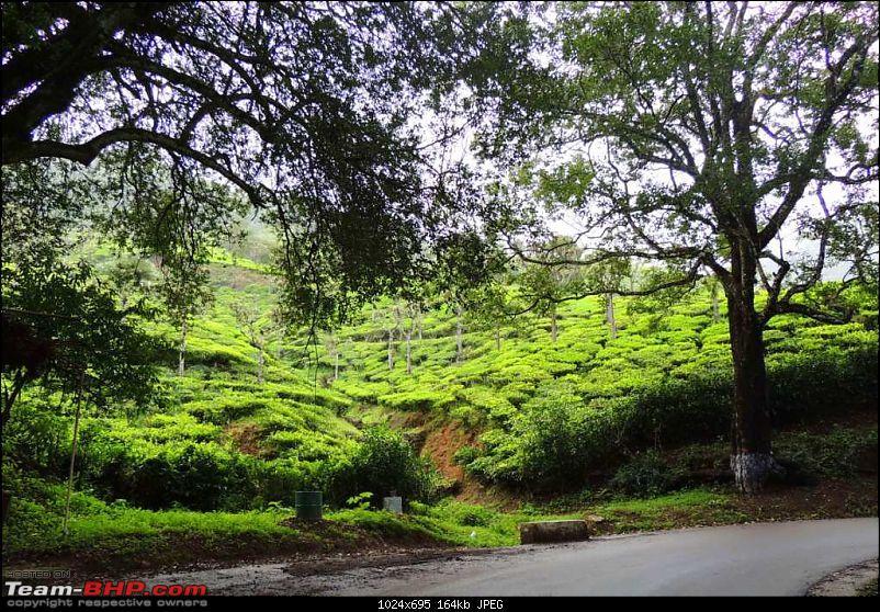 Amongst the misty Blue Mountains- Kochi to Ooty-26.jpg