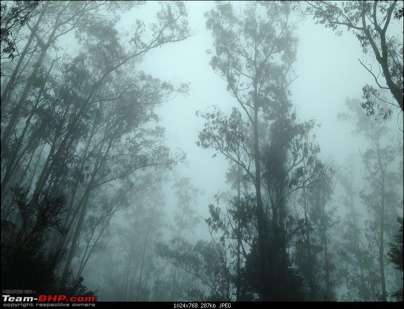 Amongst the misty Blue Mountains- Kochi to Ooty-7.jpg