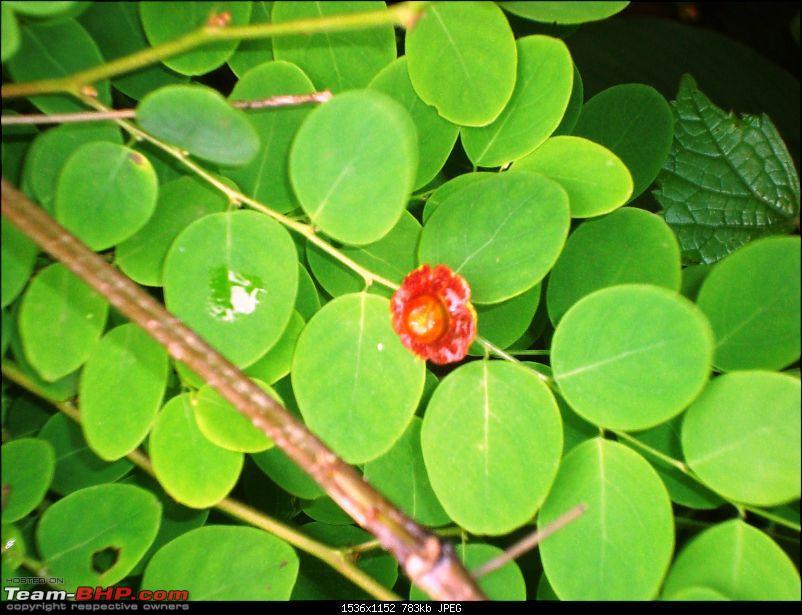Shilonda Trail (Nature Walk) @ Sanjay Gandhi National Park, Borivali-dsc04053.jpg