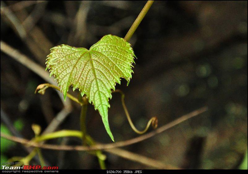 Shilonda Trail (Nature Walk) @ Sanjay Gandhi National Park, Borivali-j19a-dsc_1563.jpg