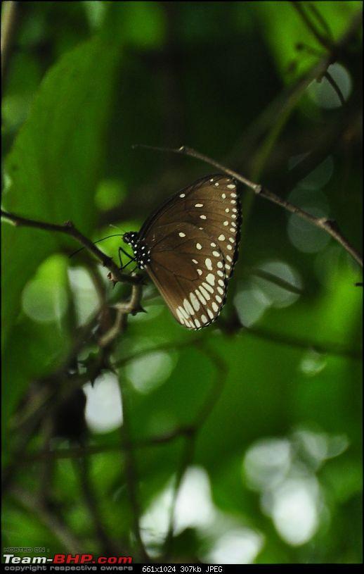Shilonda Trail (Nature Walk) @ Sanjay Gandhi National Park, Borivali-j20-dsc_1567.jpg