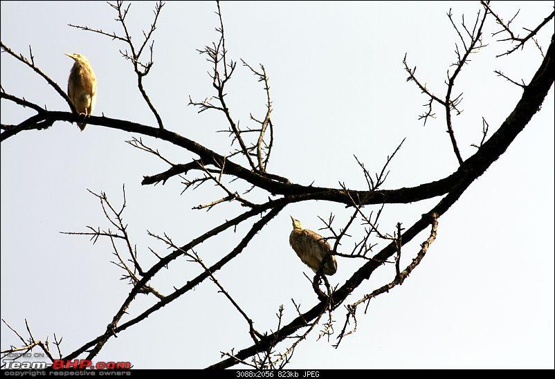Travelogue: Bangalore -> Valparai-img_2377.jpg