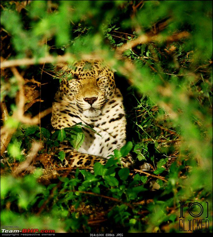 Deep into Leopard County (no, it's not Kabini). Bera, Rajasthan!-img_0934.jpg