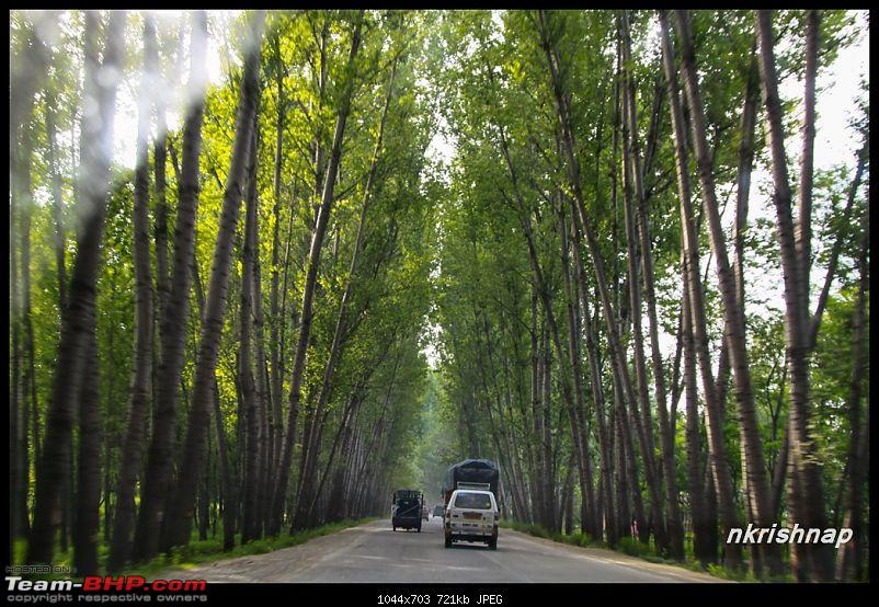 A glimpse of Paradise (Leh): 7300 kms, 8 States in a Linea-kashmir-green-tunnel.jpg