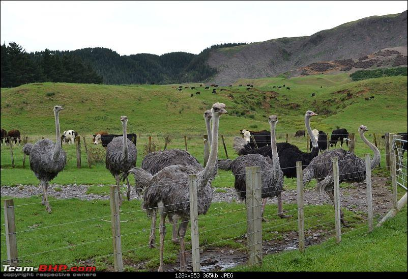 100% Pure New Zealand EDIT: New Pictures on Page 2-ostrich.jpg