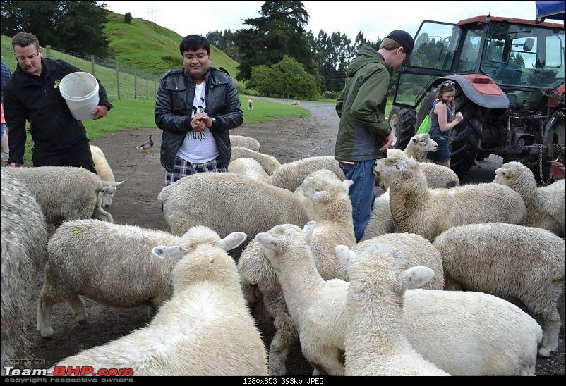 100% Pure New Zealand EDIT: New Pictures on Page 2-they-were-all-over-place.jpg