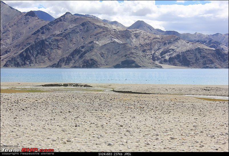 The Yayawar Group wanders in Ladakh & Spiti-32.-ducks.jpg