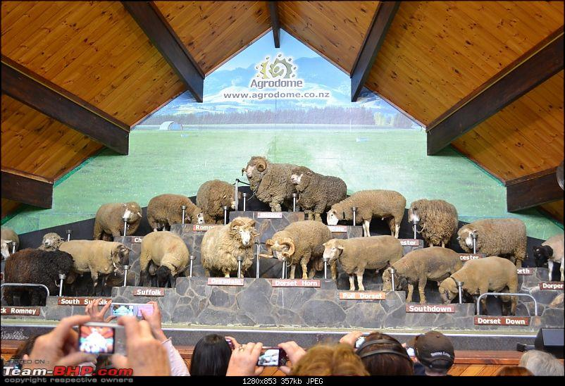 100% Pure New Zealand EDIT: New Pictures on Page 2-sheep-agrodome.jpg