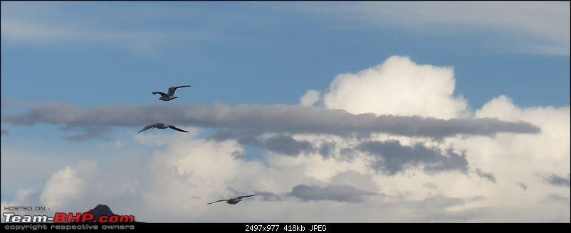 A Biker's Anthem: Ladakh-flying-birds.jpg