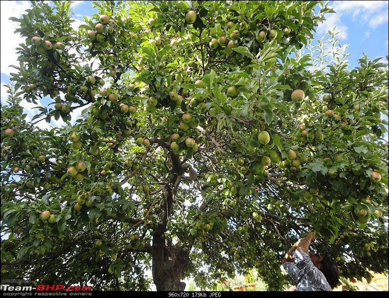 25-0-40 DownUnder to UpOver - LEH'd 2013-house-apple-tree.jpg