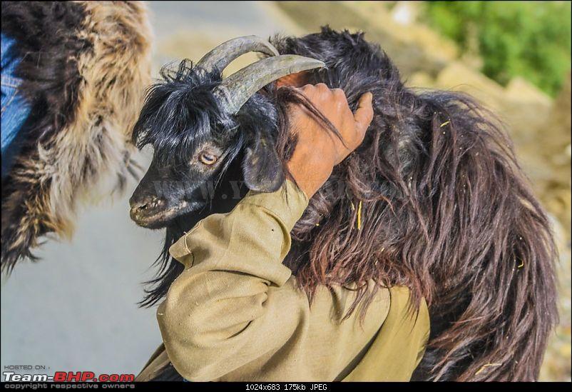 The Yayawar Group wanders in Ladakh & Spiti-5.20.jpg