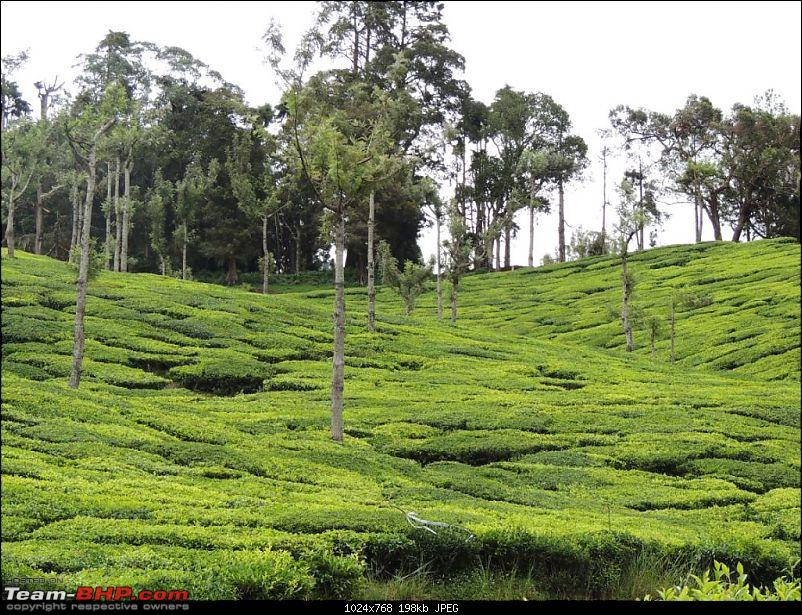 Breathe, you are in God's own country! A visit to Munnar-6-enroute-top-station-4.jpg