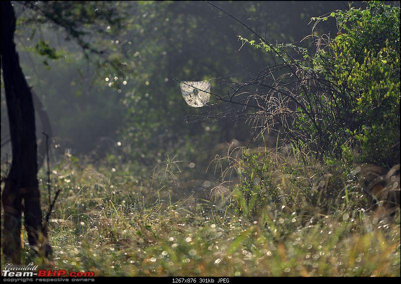 Gurgaon - Sariska - Gurgaon - Phew...Finally sighted one of the Tiger Cubs of ST2-1682.jpg