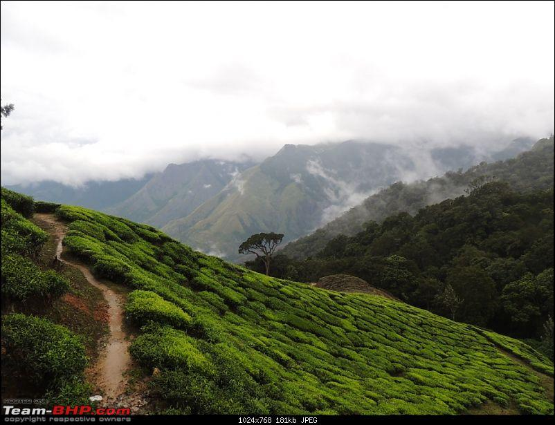 Breathe, you are in God's own country! A visit to Munnar-20-random-3.jpg