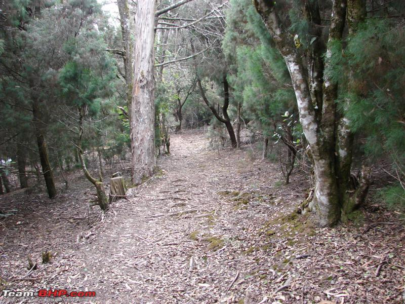 Name:  Path through the forest.JPG