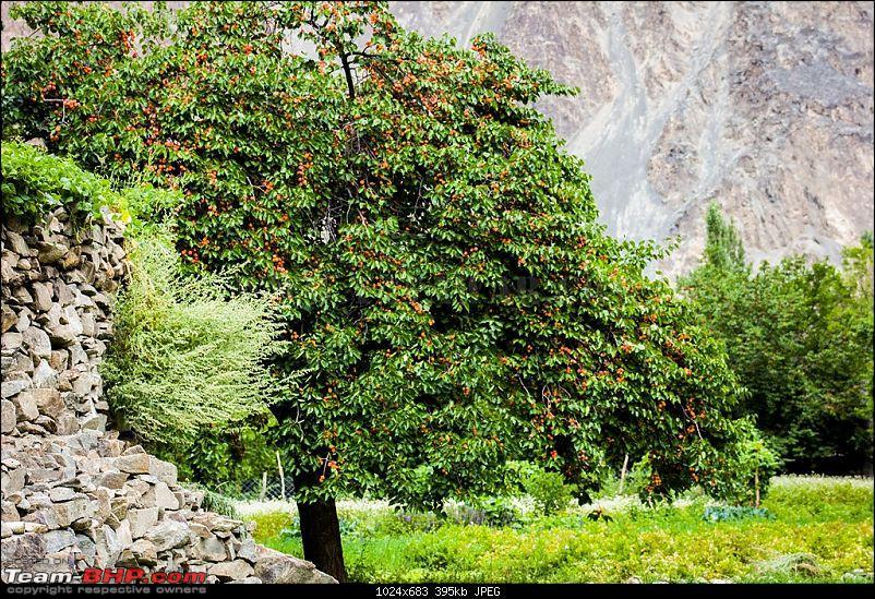 The Yayawar Group wanders in Ladakh & Spiti-9.27.jpg