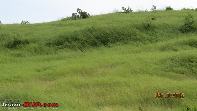 Name:  Lush Green Bhimashankar.jpg Views: 1782 Size:  84.8 KB
