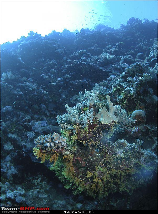 Scuba Diving in the Great Barrier Reefs-dscn0122.jpg
