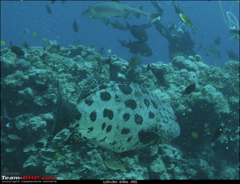 Scuba Diving in the Great Barrier Reefs-dscn0197.jpg