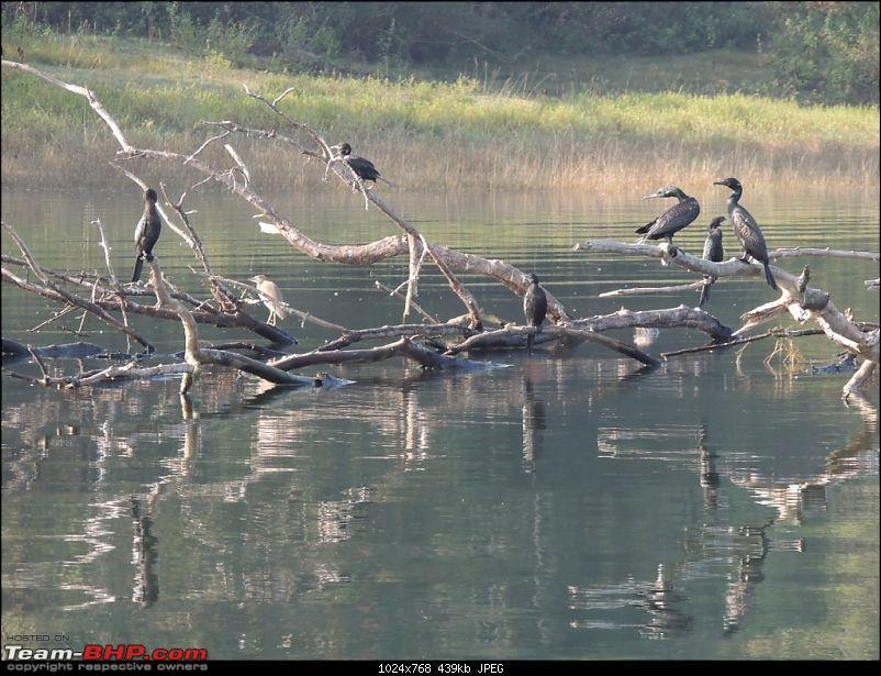 Team-BHP Bangalore meet at Bhadra reserve (09-10 Nov 2013): Call of the wild-dscn0774-1024x768.jpg