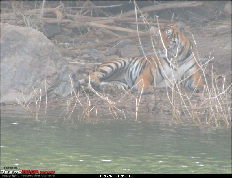 Team-BHP Bangalore meet at Bhadra reserve (09-10 Nov 2013): Call of the wild-dscn0790-1024x768.jpg