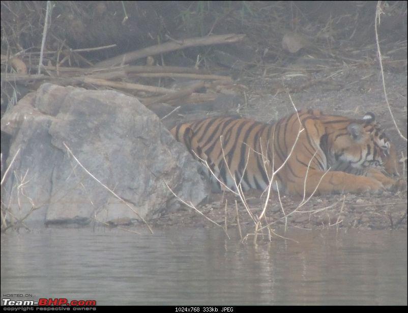 Team-BHP Bangalore meet at Bhadra reserve (09-10 Nov 2013): Call of the wild-dscn0801-1024x768.jpg