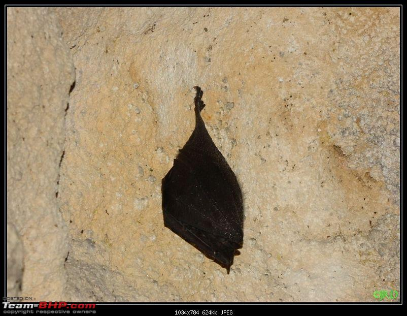 Caving Trip to Krem Mawmluh: 4th Longest Cave in the Indian Subcontinent-jrd2.jpg