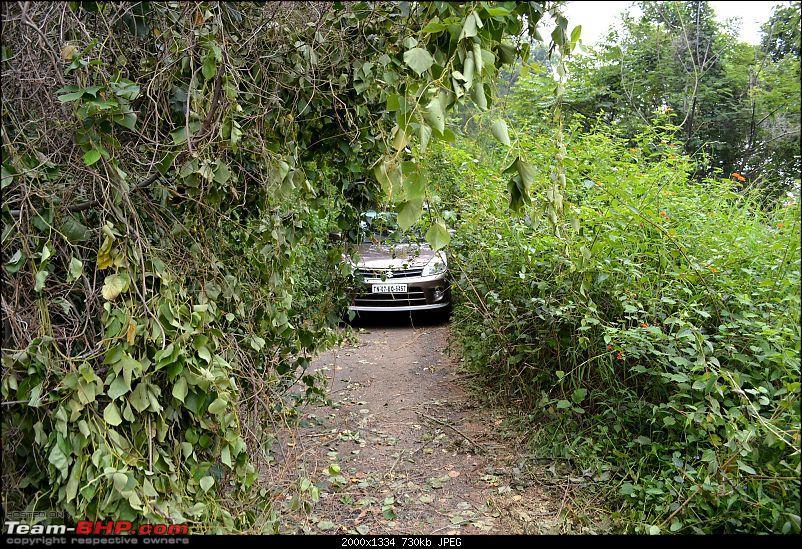 Driving down Kodaikanal - The Adukkam Route-zz_narrowbush.jpg