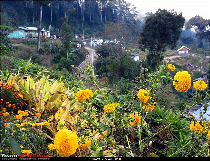 "Marengo goes to Ramitey Top & Sillery Gaon - The ""New Darjeeling""-img_2081.jpg"