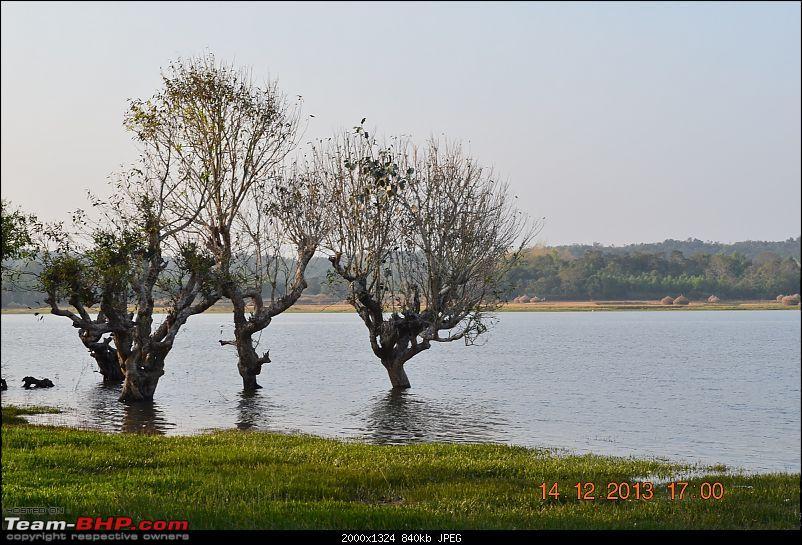 Monsoon in Malnad-11.jpg