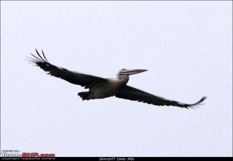 A Trip to Pulicat Lake (Tamil Nadu), December 2013-_mg_1231.jpg