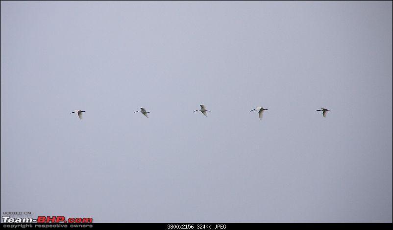 A Trip to Pulicat Lake (Tamil Nadu), December 2013-_mg_1299.jpg