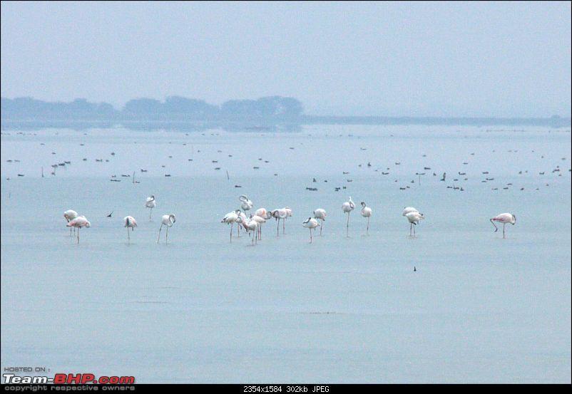 A Trip to Pulicat Lake (Tamil Nadu), December 2013-_mg_1408.jpg