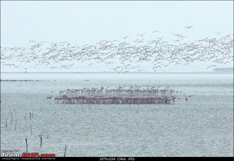 A Trip to Pulicat Lake (Tamil Nadu), December 2013-_mg_1466.jpg