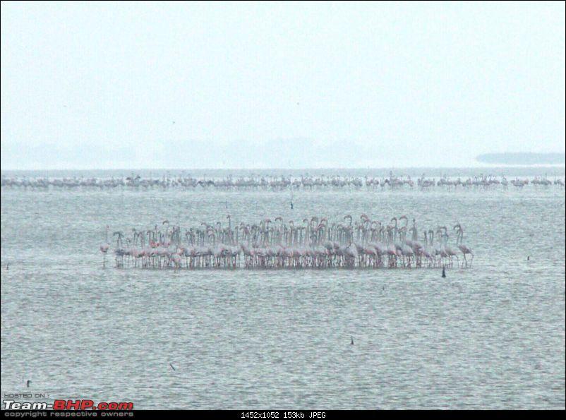 A Trip to Pulicat Lake (Tamil Nadu), December 2013-_mg_1490.jpg