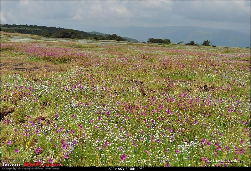 The Jet® is mesmerized by the plateau of flowers: A drive to Kaas valley and beyond-dsc_0139.jpg
