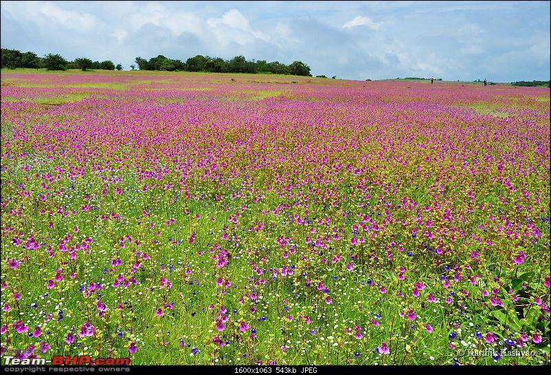The Jet® is mesmerized by the plateau of flowers: A drive to Kaas valley and beyond-dsc_0157.jpg