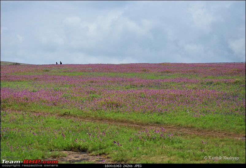 The Jet® is mesmerized by the plateau of flowers: A drive to Kaas valley and beyond-dsc_0195.jpg