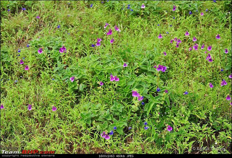 The Jet® is mesmerized by the plateau of flowers: A drive to Kaas valley and beyond-dsc_0197.jpg
