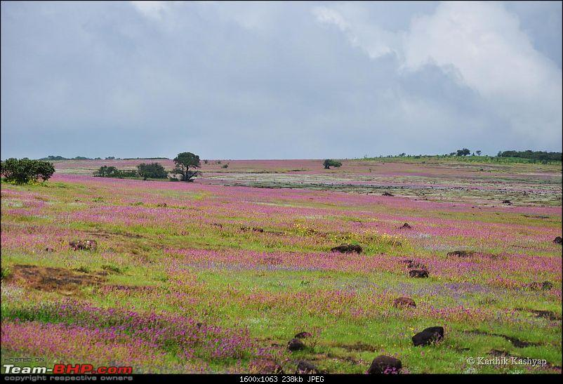 The Jet® is mesmerized by the plateau of flowers: A drive to Kaas valley and beyond-dsc_0216.jpg