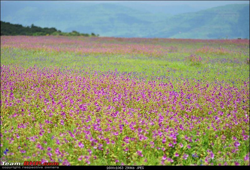 The Jet® is mesmerized by the plateau of flowers: A drive to Kaas valley and beyond-dsc_0261.jpg