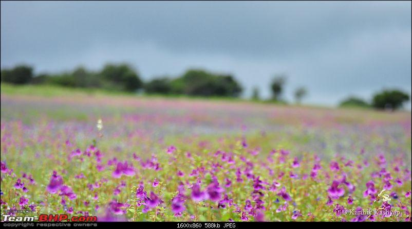 The Jet® is mesmerized by the plateau of flowers: A drive to Kaas valley and beyond-dsc_0262.jpg