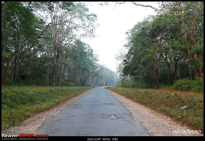 A quick dash to the Lap of Nature (Nagarhole)-img_4104.jpg